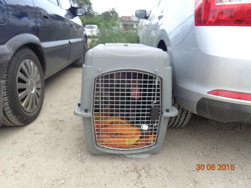 Pies zamknięty w rozgrzanym samochodzie