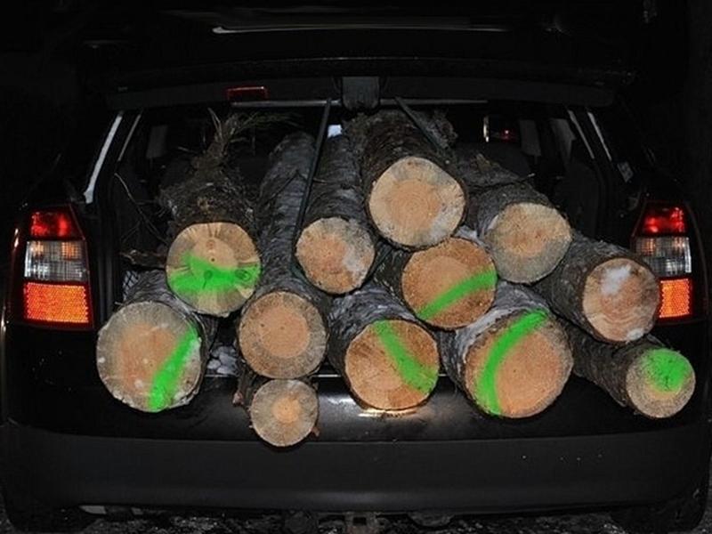 Odpowiedzą za kradzież drewna
