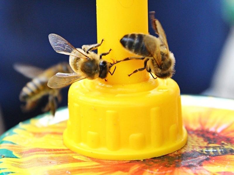 Świętują pszczoły