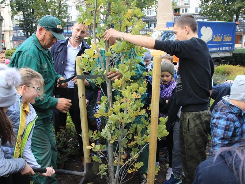 Przybyło drzew w Parku Solidarności