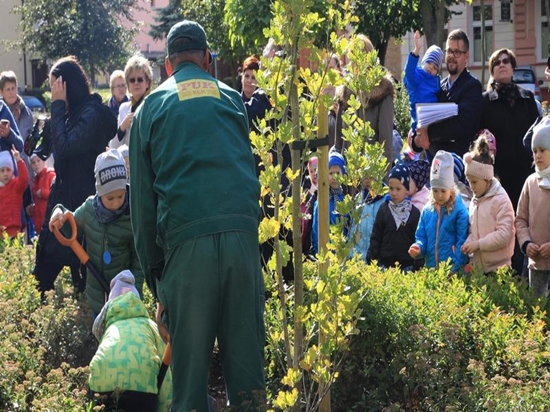 Drzewa w Parku Solidarności na cześć ełczanek