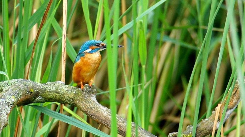 W Wigierskim Parku Narodowym policzyli ptaki