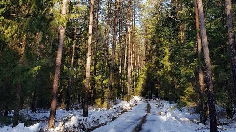 """""""Wyloguj się i idź na spacer do lasu"""""""