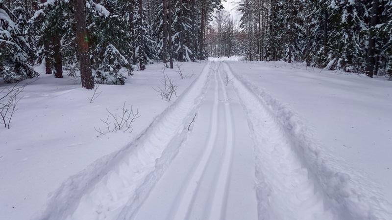 Leśnicy przygotowali trasy