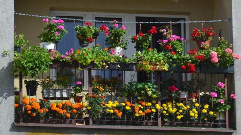 Kto ma najpiękniejszy ogród?